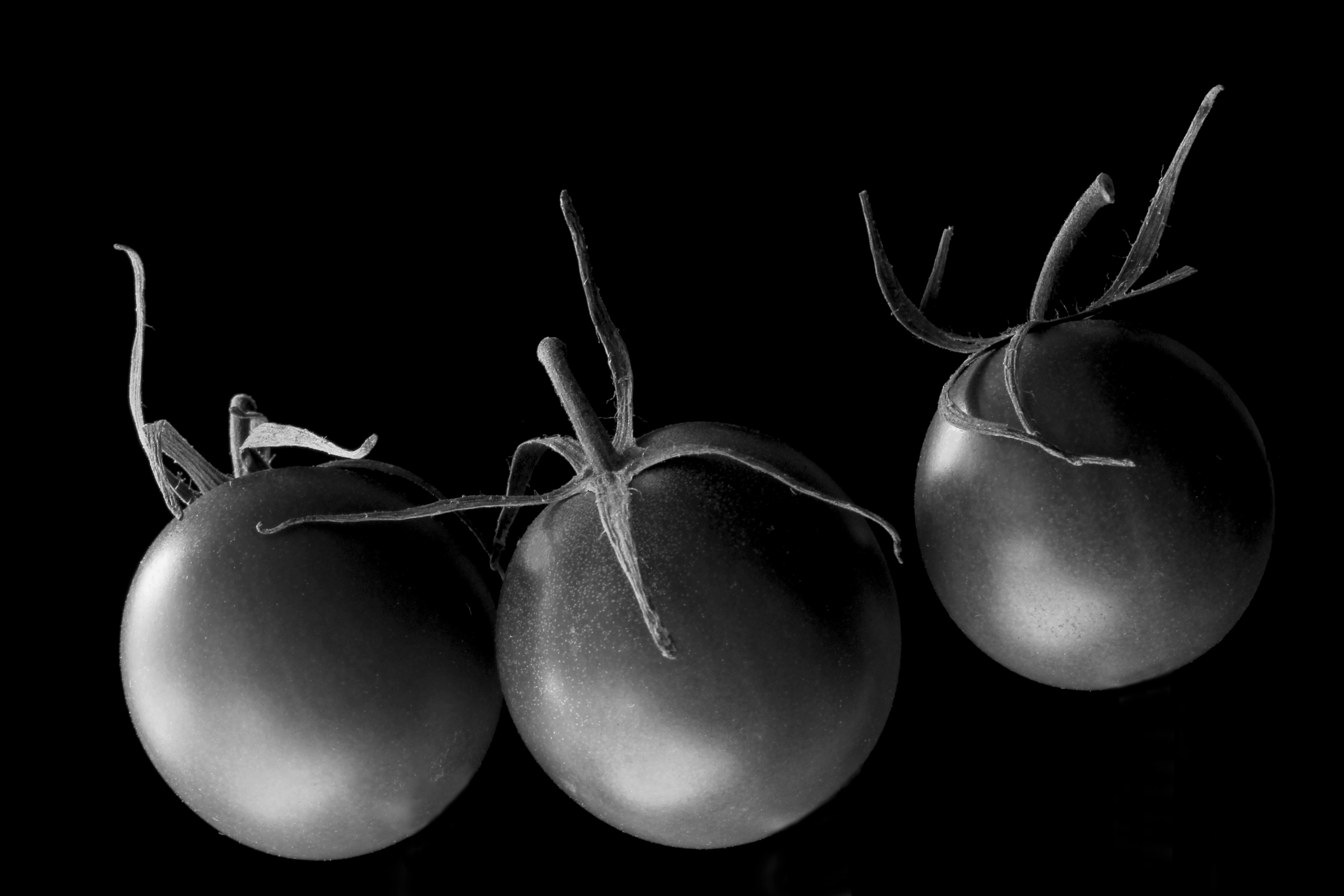 Food photography redzenradish photography